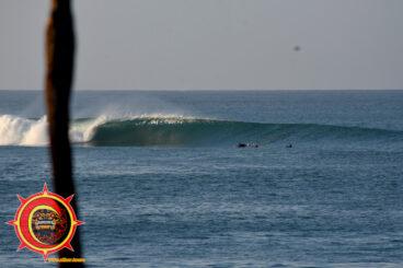 Nexpa Surfing