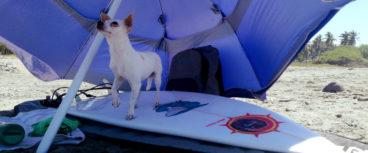 rudos surfboards model alber.tours